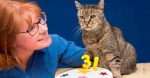 El gato más viejo del mundo cumplió 31 años y los celebra lleno de emoción (por dentro)