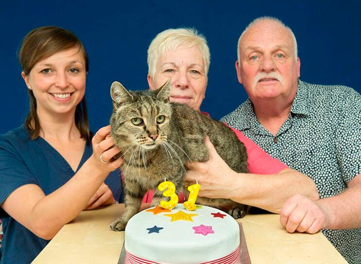 el-gato-mas-viejo-del-mundo-cumplio-31-anos-y-los-celebra-lleno-de-emocion-por-dentro-7