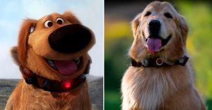 El perro de Up realmente existe y vas a querer tener uno como él