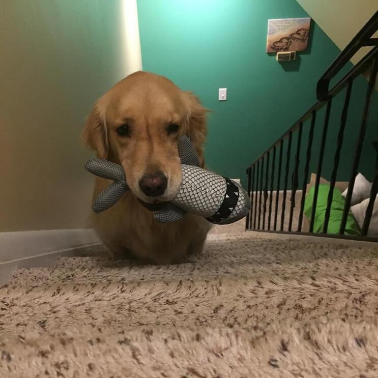 este-es-el-perro-es-el-mas-simpatico-y-regalon-que-internet-ha-conocido-1