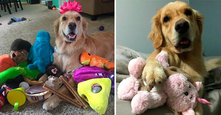 Este es el perro más simpático y regalón que Internet ha conocido