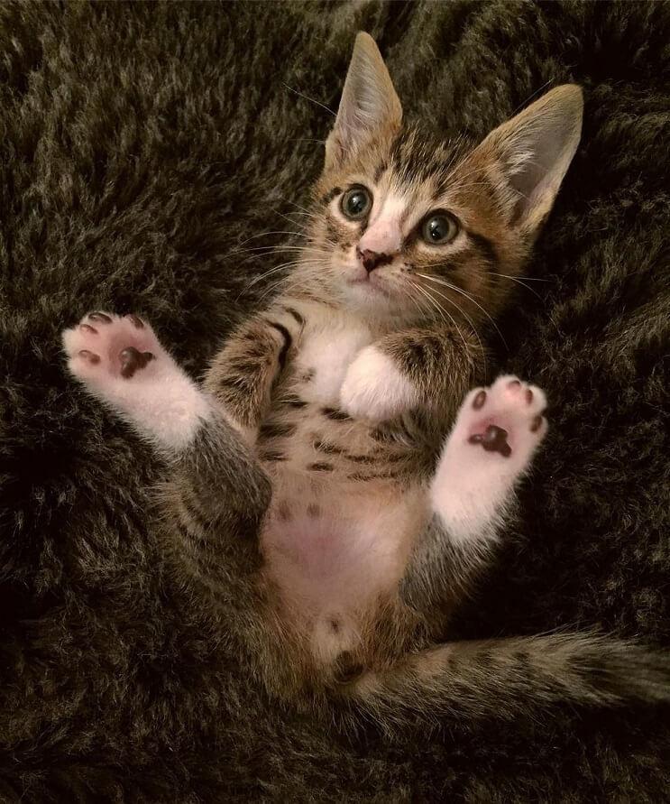 este-gato-recien-rescatado-si-que-disfruto-su-primer-bano-4-1
