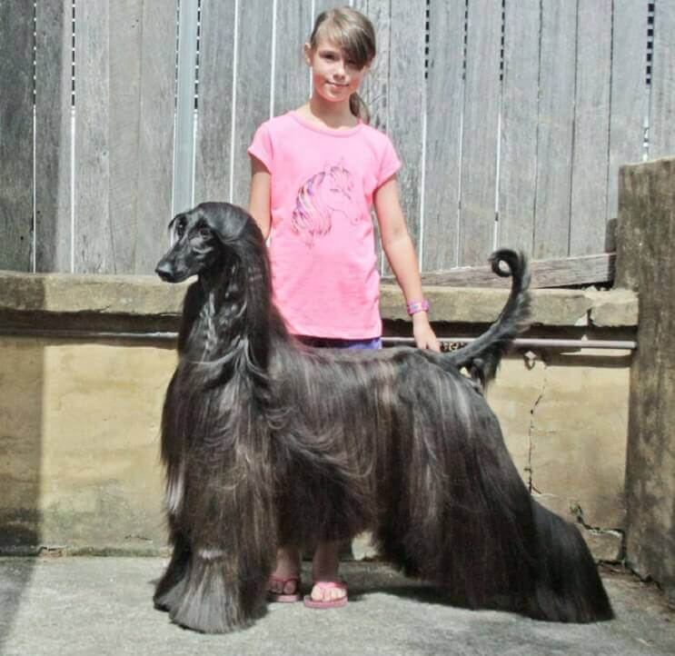 este-perro-ha-sido-elegido-como-el-mas-bello-del-mundo-6