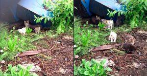 Estos gatitos fueron rescatados y ahora gozan de un hogar y familia que los ama