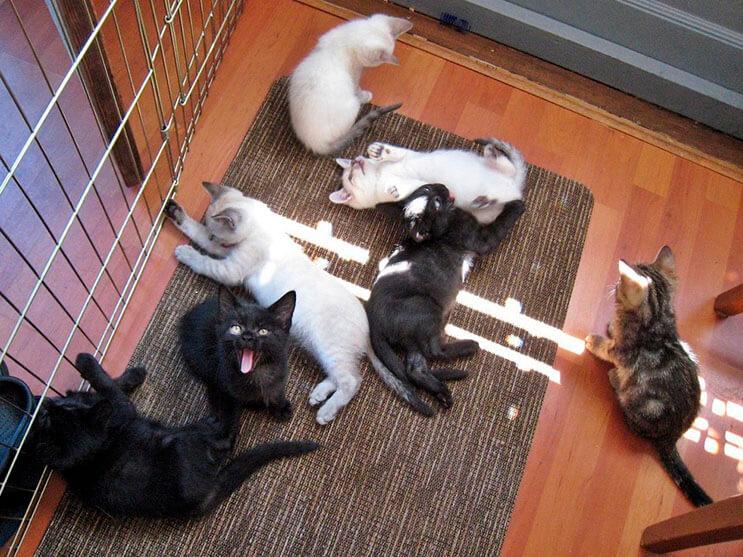 estos-gatitos-fueron-rescatados-y-ahora-gozan-de-un-hogar-y-familia-que-los-ama-2