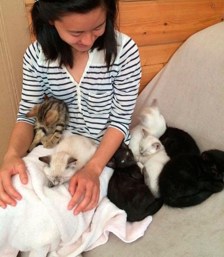 estos-gatitos-fueron-rescatados-y-ahora-gozan-de-un-hogar-y-familia-que-los-ama-3