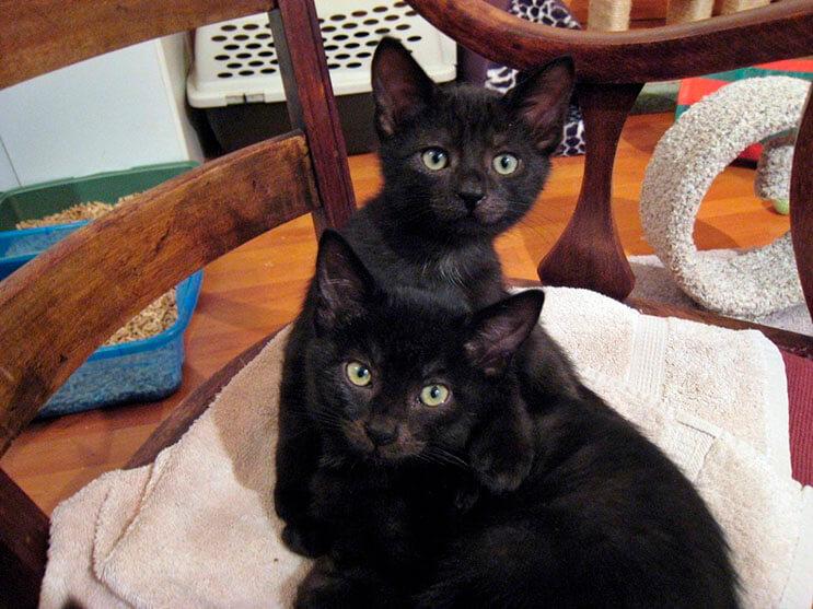 estos-gatitos-fueron-rescatados-y-ahora-gozan-de-un-hogar-y-familia-que-los-ama-4