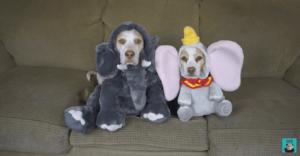 Estos perros se ganaron el cariño de Internet por los divertidos trajes con los que los han disfrazado