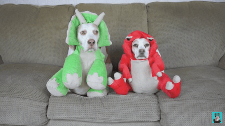 estos-perros-se-ganaron-el-carino-de-internet-por-los-divertidos-trajes-con-los-que-los-han-disfrazado-dinosaurios