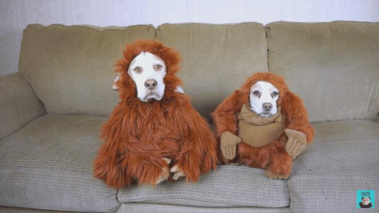estos-perros-se-ganaron-el-carino-de-internet-por-los-divertidos-trajes-con-los-que-los-han-disfrazado-monos