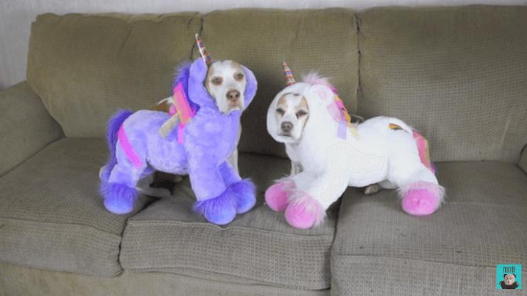 estos-perros-se-ganaron-el-carino-de-internet-por-los-divertidos-trajes-con-los-que-los-han-disfrazado-unicornio