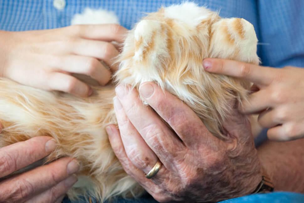 hasbro-se-enfoca-en-la-creacion-de-perros-robot-para-hacerles-compania-a-los-ancianos-2