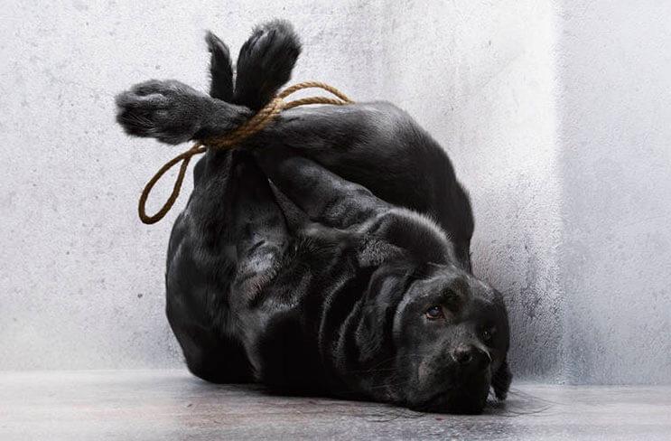 impactante-campana-que-nos-muestra-como-muchos-tratan-a-sus-mascotas-como-basura-2
