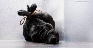 Impactante campaña nos muestra cómo muchos tratan a sus mascotas como basura