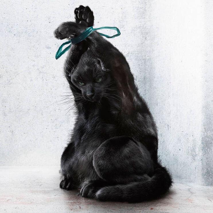 impactante-campana-que-nos-muestra-como-muchos-tratan-a-sus-mascotas-como-basura-5