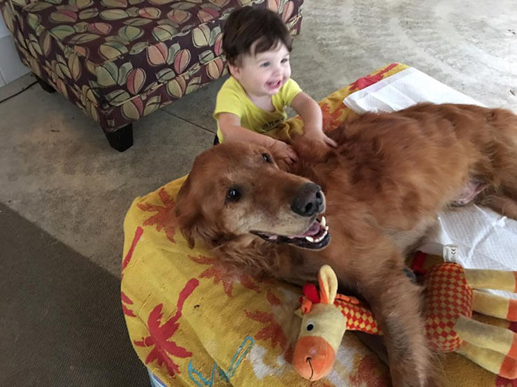 la-historia-de-este-perro-con-cancer-y-el-carro-que-su-dueno-le-construyo-los-conmovera-2