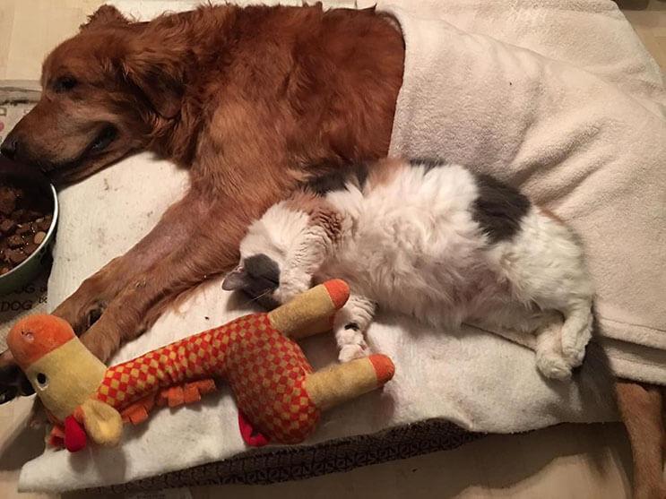 la-historia-de-este-perro-con-cancer-y-el-carro-que-su-dueno-le-construyo-los-conmovera-3