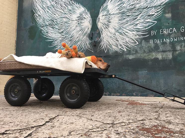 la-historia-de-este-perro-con-cancer-y-el-carro-que-su-dueno-le-construyo-los-conmovera-5