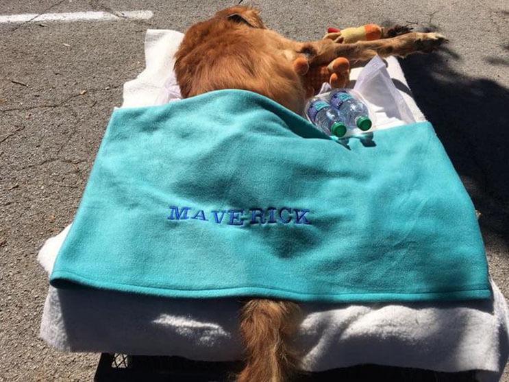 la-historia-de-este-perro-con-cancer-y-el-carro-que-su-dueno-le-construyo-los-conmovera-7