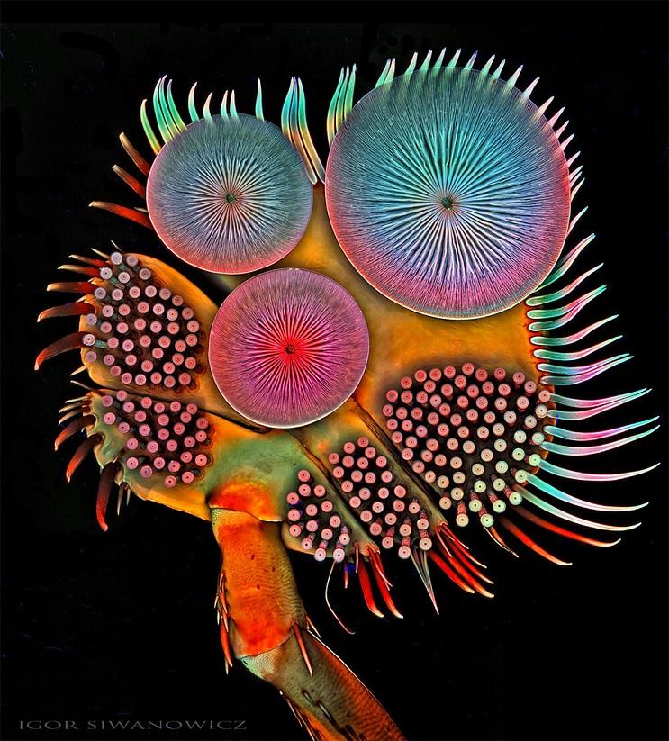 las-increibles-imagenes-de-insectos-tras-un-microscopio-de-escaneo-laser-por-igor-siwanowicz-01