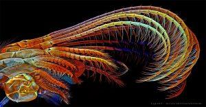 Fotografías microscópicas que muestran la belleza de lo que no podemos ver a simple vista