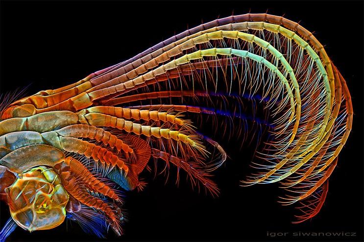 las-increibles-imagenes-de-insectos-tras-un-microscopio-de-escaneo-laser-por-igor-siwanowicz-02