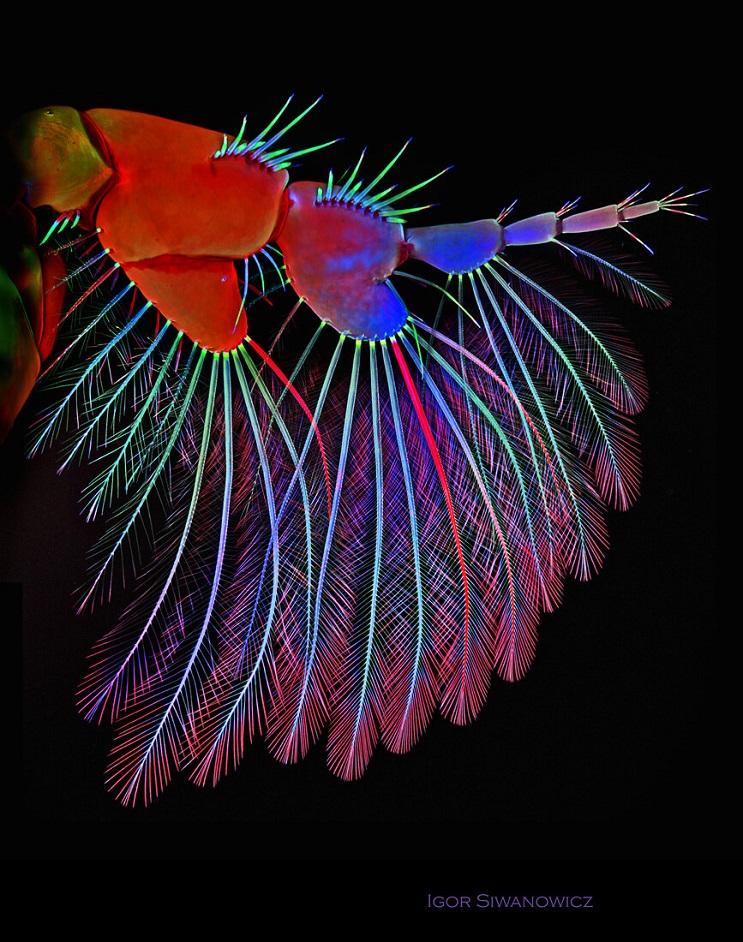 las-increibles-imagenes-de-insectos-tras-un-microscopio-de-escaneo-laser-por-igor-siwanowicz-05