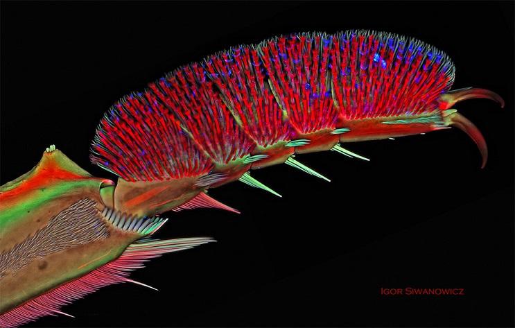 las-increibles-imagenes-de-insectos-tras-un-microscopio-de-escaneo-laser-por-igor-siwanowicz-06