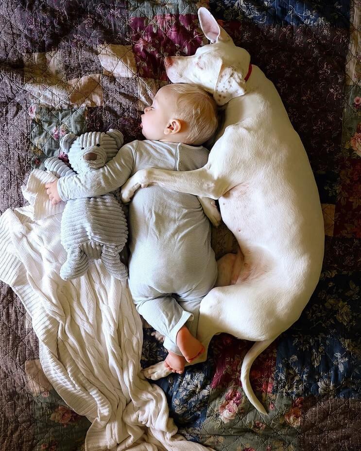las-siestas-de-estos-dos-hermanos-encantaran-a-todos-y-daran-ganas-de-echarse-un-rato-3-1