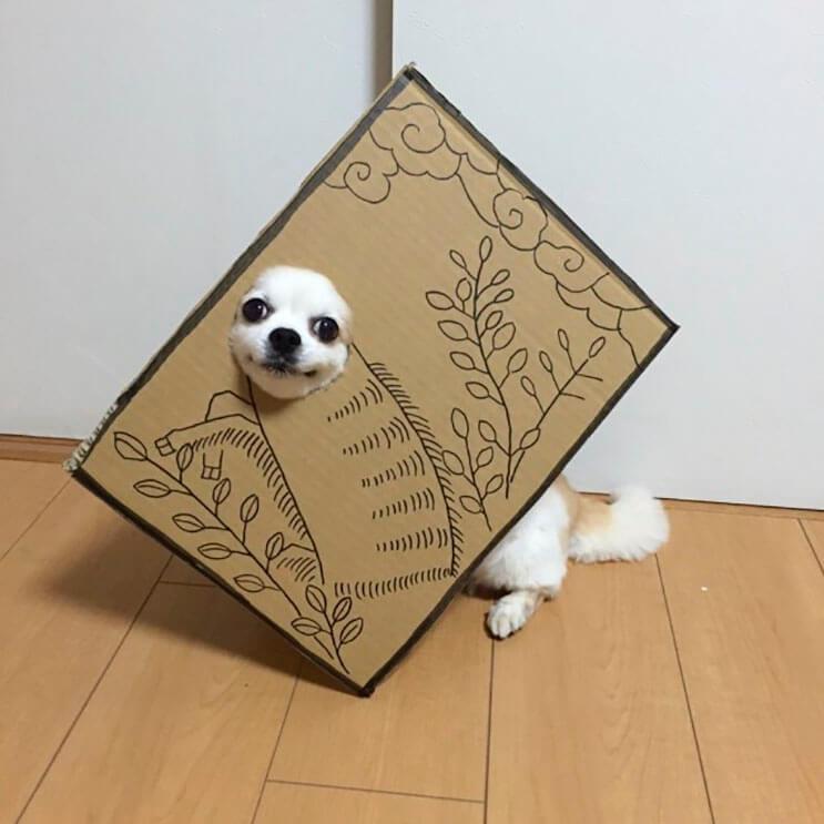 si-no-quieres-gastar-una-fortuna-en-el-disfraz-de-tu-perro-haz-lo-que-esta-artista-hizo-con-carton-10