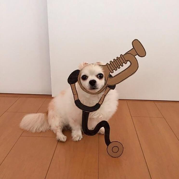 si-no-quieres-gastar-una-fortuna-en-el-disfraz-de-tu-perro-haz-lo-que-esta-artista-hizo-con-carton-16