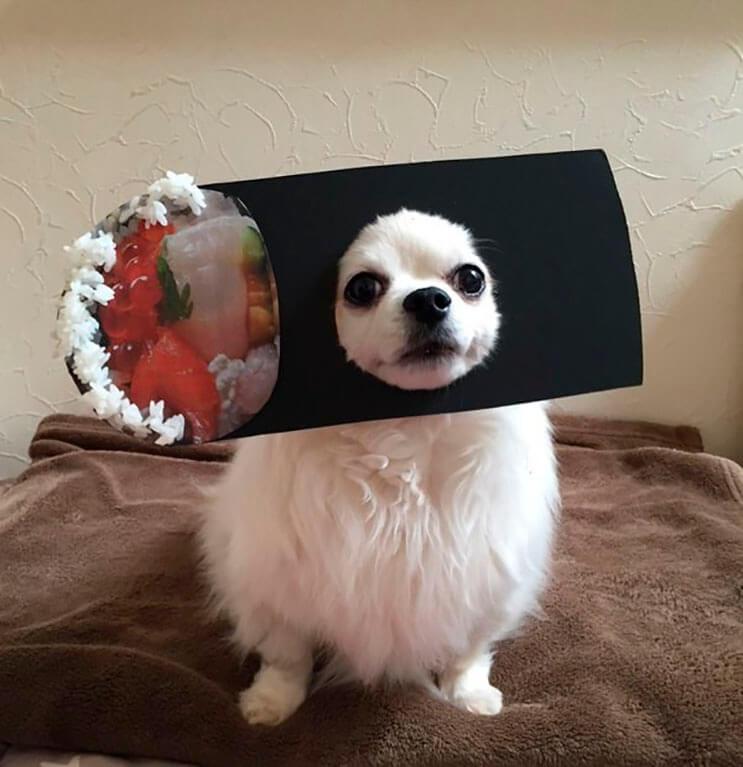 si-no-quieres-gastar-una-fortuna-en-el-disfraz-de-tu-perro-haz-lo-que-esta-artista-hizo-con-carton-17
