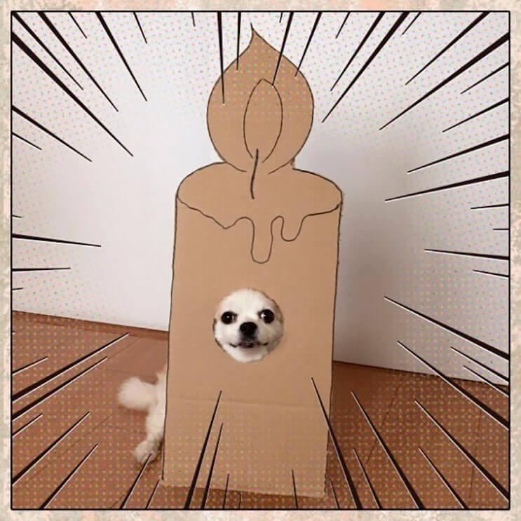 si-no-quieres-gastar-una-fortuna-en-el-disfraz-de-tu-perro-haz-lo-que-esta-artista-hizo-con-carton-19