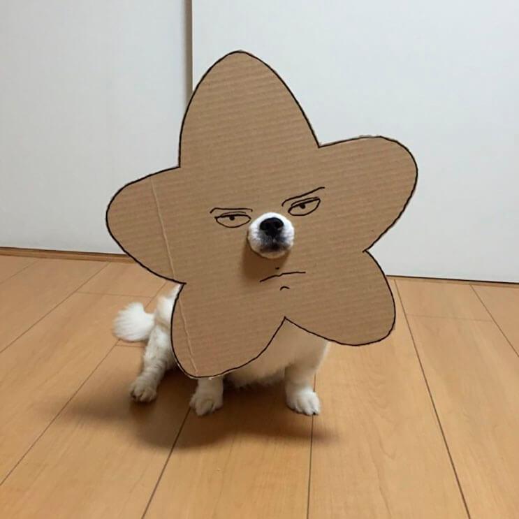 si-no-quieres-gastar-una-fortuna-en-el-disfraz-de-tu-perro-haz-lo-que-esta-artista-hizo-con-carton-20