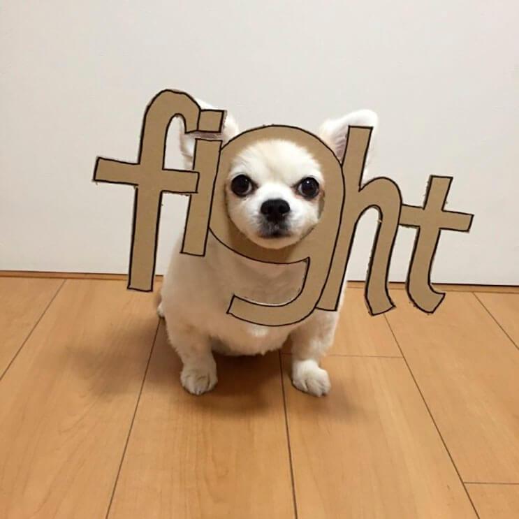 si-no-quieres-gastar-una-fortuna-en-el-disfraz-de-tu-perro-haz-lo-que-esta-artista-hizo-con-carton-21
