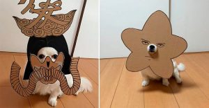 Si no quieres gastar una fortuna en el disfraz de tu perro, haz lo que esta artista hizo con cartón
