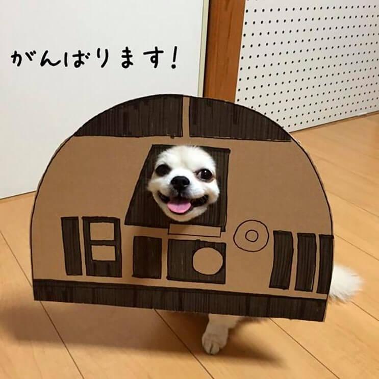 si-no-quieres-gastar-una-fortuna-en-el-disfraz-de-tu-perro-haz-lo-que-esta-artista-hizo-con-carton-6