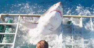 Tiburón se metió a la jaula de protección y nos enseña por qué no es bueno meterse con ellos