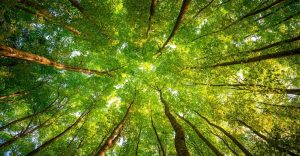 Un estudio demuestra que los árboles eligen a sus amigos y que se cuidan entre ellos mismos