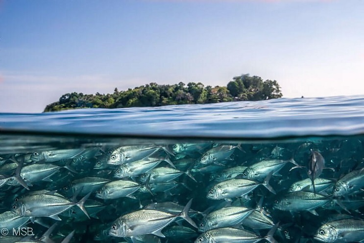 vision-de-dos-mundos-fotografias-que-capturan-lo-mejor-del-mar-05
