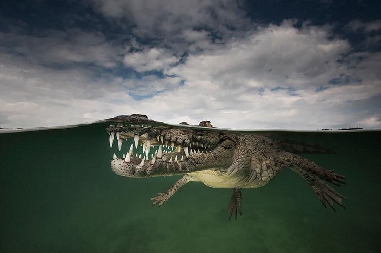 vision-de-dos-mundos-fotografias-que-capturan-lo-mejor-del-mar-06