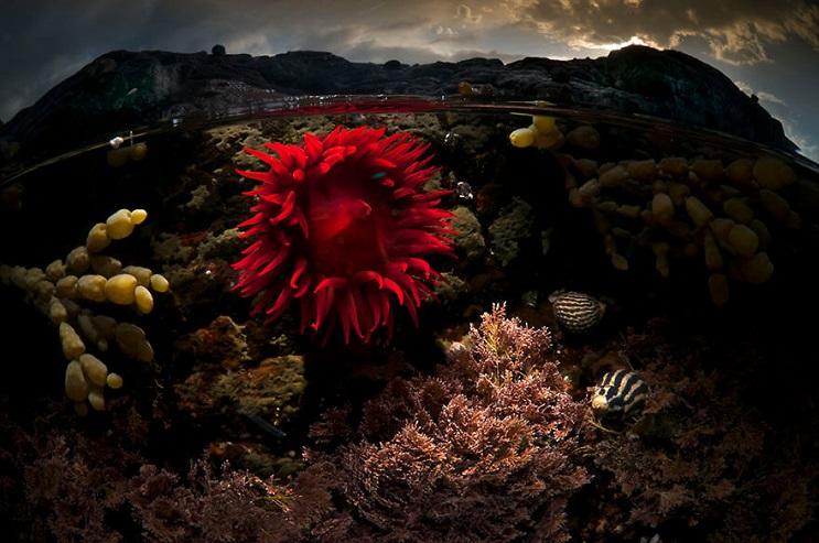 vision-de-dos-mundos-fotografias-que-capturan-lo-mejor-del-mar-07