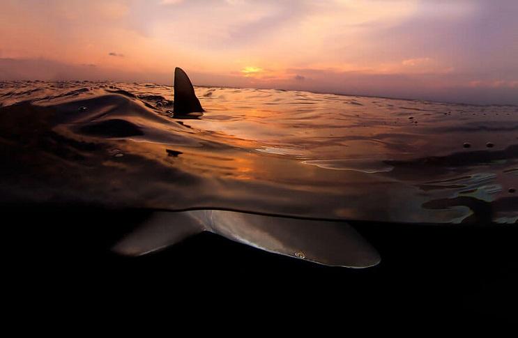 vision-de-dos-mundos-fotografias-que-capturan-lo-mejor-del-mar-10