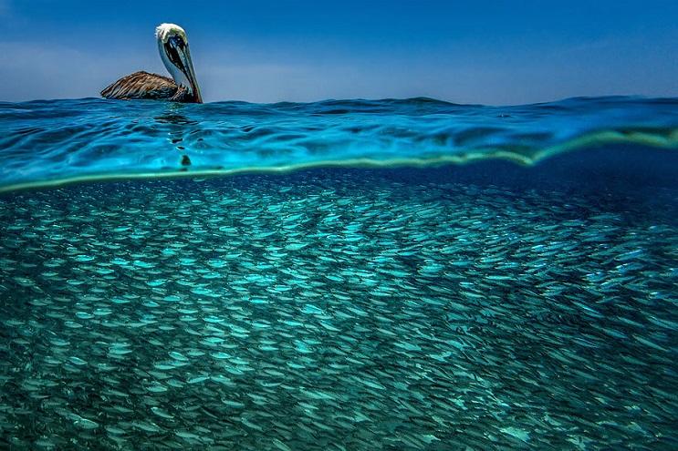 vision-de-dos-mundos-fotografias-que-capturan-lo-mejor-del-mar-11