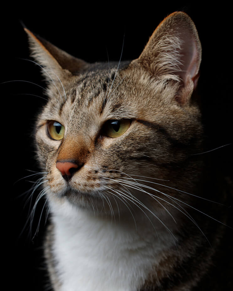 Akimasa Harada, un fotógrafo que apuesta por la belleza de los gatos