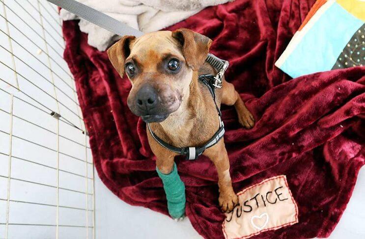 el-perro-al-que-amarraron-con-cinta-adhesiva-su-hocico-ahora-tiene-su-propio-peluche-09