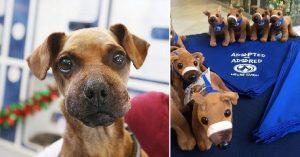 El perro al que amarraron con cinta adhesiva su hocico, ahora tiene su propio peluche
