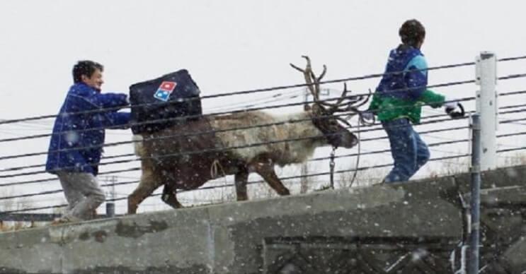 esta-navidad-dominos-pizza-busca-llevar-sus-pizzas-con-renos-de-verdad-practicas