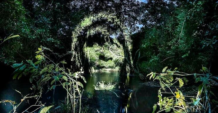 estas-proyecciones-sobre-arboles-nos-muestran-una-bella-union-entre-hombre-y-naturaleza-4