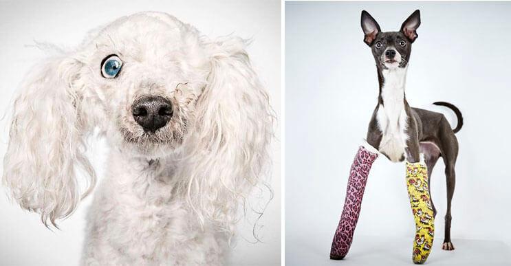 Fotógrafo hace con perros abandonados una gran sesión para ayudarlos a que sean adoptados